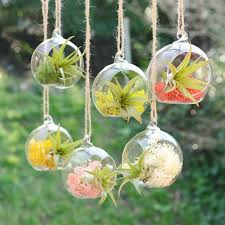 Air Plant Terrarium Small Hanging Glass Vase Air Plant Terrarium By Dingading