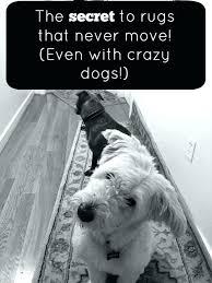 best rugs for dogs sisal rug dog hair the best pad for dogs page pads sisal best rugs for dogs