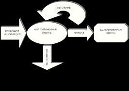 дипломная работа по психологии на тему память Реферат виды способы улучшения особенности двигательная слуховая узнавание Психология ⇒ скачать бесплатно реферат на тему Память