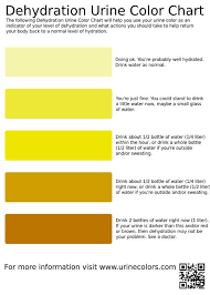 Dehydration Urine Color Chart Infographic Health Summer