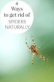 how to rid of spiders get naturally eliminate outside house kill in e63