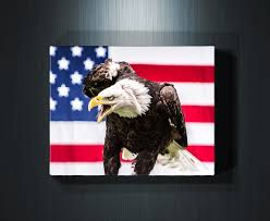 wildlife wall art print of a bald eagle posing in front of an american flag available on american eagle metal wall art with american eagle rogue aurora photography