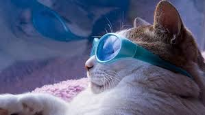 Cat Facts: 5 Amazing Ways Your Cat Stays Cool In The Summer - CatTime
