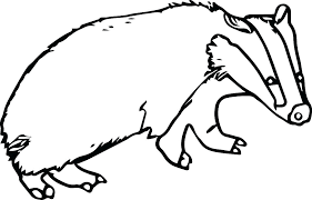 River Ringtail Possum Coloring Pages Badger Coloring Pages Nocturnal