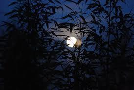Kết quả hình ảnh cho ánh trăng
