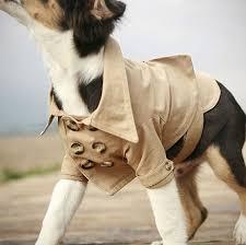 dog wedding trench coat westerly