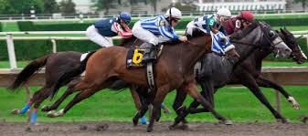 Image result for horses racing with blinders