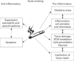 acute effects of cigarette smoke on inflammation and oxidative   figure