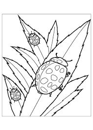 Tranh tô màu ba con cánh cam « in hình này