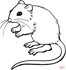 Small Picture Mouse coloring page Free Printable Coloring Pages