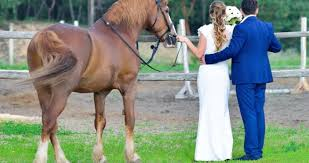 25 best ranch wedding venues in the