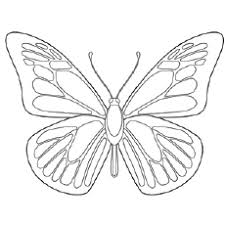 Nine free printable butterfly coloring pages that include five sets of small butterflies and four large butterflies. Top 50 Free Printable Butterfly Coloring Pages Online