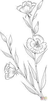 Clarkia Amoena Farewell To Spring Coloring