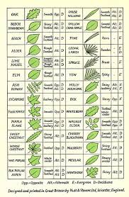 Leaf Identification Tree Leaf Identification Tree