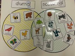 diurnal animals list for kids. Exellent List Super Wildlife Room 2 Have Some Animals Printed Out And Leave Blank  So The Kids Can Research Their Own Animals Diurnal Vs Nocturnal Venn  On Animals List For Kids R
