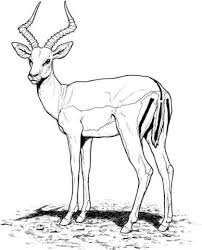 Small Picture Impala Antelope coloring page Free Printable Coloring Pages