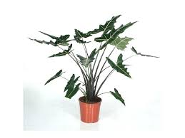 best tall indoor plants tall house plant exotic house plant in pot tall foliage plant best