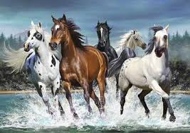wild horses galloping. Plain Wild Intended Wild Horses Galloping