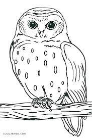 Kleurplaat Uil Owl Colouring Page Pöllöjä Mustavalkoinen Coloring