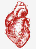 Image result for human heart gothic
