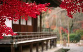 Japanese Autumn Leaves-HD Desktop ...
