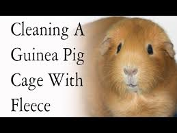 cleaning a diy guinea pig cage with