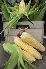 Farm Fresh Living Corn On The