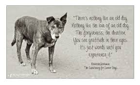 Rescue Dog Quotes Best Quotes About Shelter Dogs On QuotesTopics