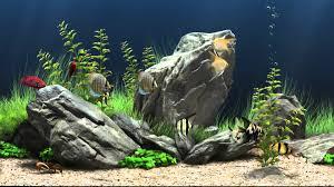 Fish Tank Dream Aquarium Virtual Fishtank 1 Youtube
