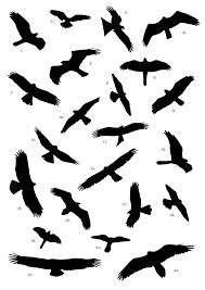 flock of birds clipart. Modren Clipart Flock Of Birds Clipart Three Bird 2 And Clipart
