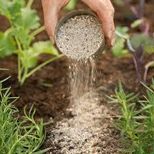 managing weeds in a vegetable garden