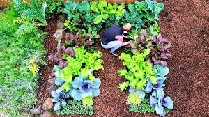 best time to plant vegetables where to plant a vegetable garden keyhole garden layout best time