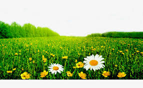 grass and flowers background. Unique Flowers Green Flowers Background Flowers Lawn Trees PNG And PSD To Grass And Flowers Background D
