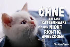 Katzenhaare Auf Kleidung Lustiger Spruch Mit Katze Sprüche Suche