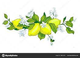 лимонное дерево в тату стиль изображения легкие маленькие цветы со