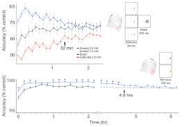 using transcranial direct current stimulation tdcs to understand figure