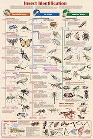 Science Chart Project Laminated Insect Identification Educational Science Chart Poster Laminated Poster 24 X 36in