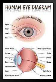 How To Make An Eye Chart Poster Eye Diagram Chart Wiring Diagrams