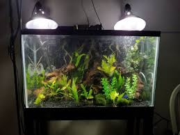 Light Requirement For Planted Aquarium The Very Basics Of Light In Planted Freshwater Aquariums