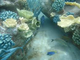 salt water pool with fish. Discovery Cove: Fish And Reef In Saltwater Pool Salt Water With Fish TripAdvisor