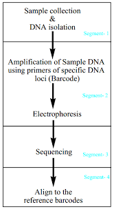 Flow Diagram Of Four Segments In Dna Barcoding Download