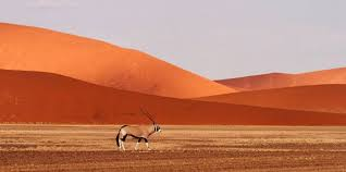 14 day safari of south africa namibia