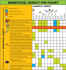 Beneficial Insects Chart Azamax Atlantis Hydroponics Blog