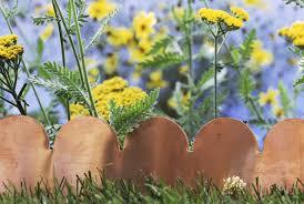garden edging ideas to make your plants pop