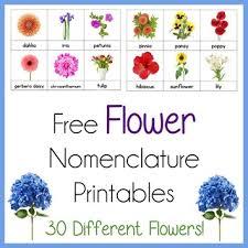 flower nomenclature printables montessori