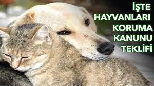 AK Partili Mahir Ünal açıkladı: İşte Hayvanları Koruma Kanunu teklifi! -  YouTube