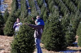 Christmas Tree Farms, Asheville & NC Mountains
