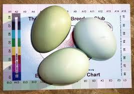 Egg Color Chart Blue Eggs Sercadia