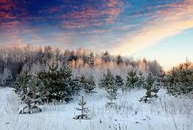 <b>Winter Scene</b> Images   Free Vectors, Stock Photos & PSD