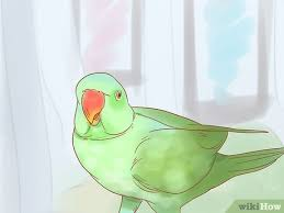 How To Care For A Parrot With Pictures Wikihow